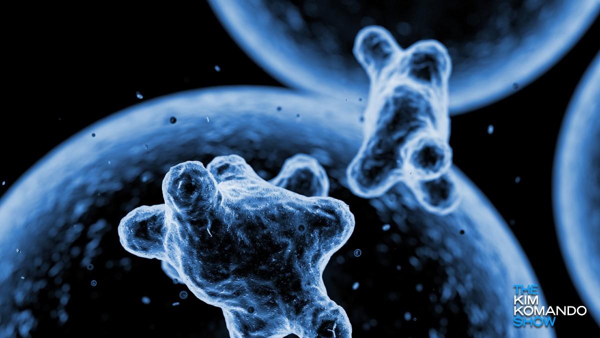 Coronavirus konspirazioaren teoriak saguzarrak janez oregano oliora hedatzen dira linean - ikusi denbora errealeko infekzioen mapa