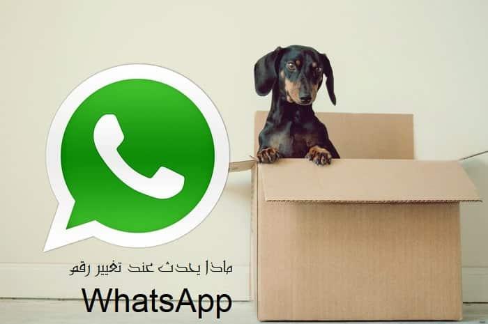 Zer gertatzen da WhatsApp zenbakia aldatzean
