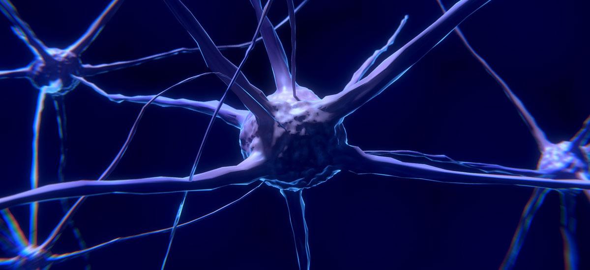 Zientzialariek lortu dute giza nerbio sistemarekin bateragarriak diren neurona programagarriak sortzea